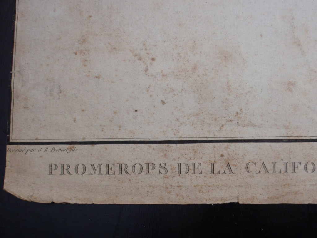 Hand colored copper-engraving Promerops de la Californie Septentrionale 1797