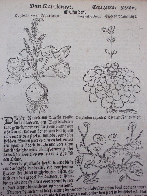 Very rare Cruijde Boeck by Rembert Dodoens (Dodonaeus) from 1563