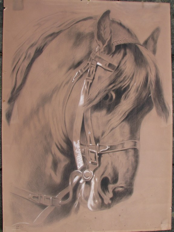 Drawing of horse head attributed to Arina Hugenholtz-1