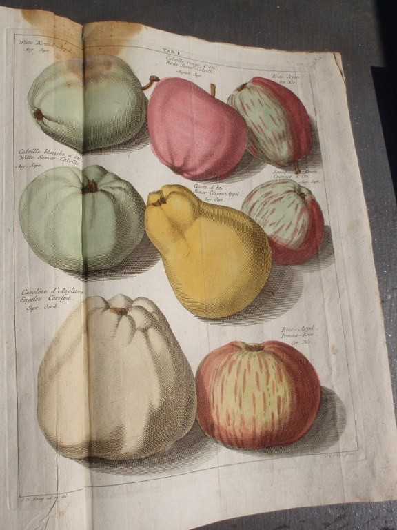Rare 18th century Dutch book on apples and pears by Johann Hermann Knoop