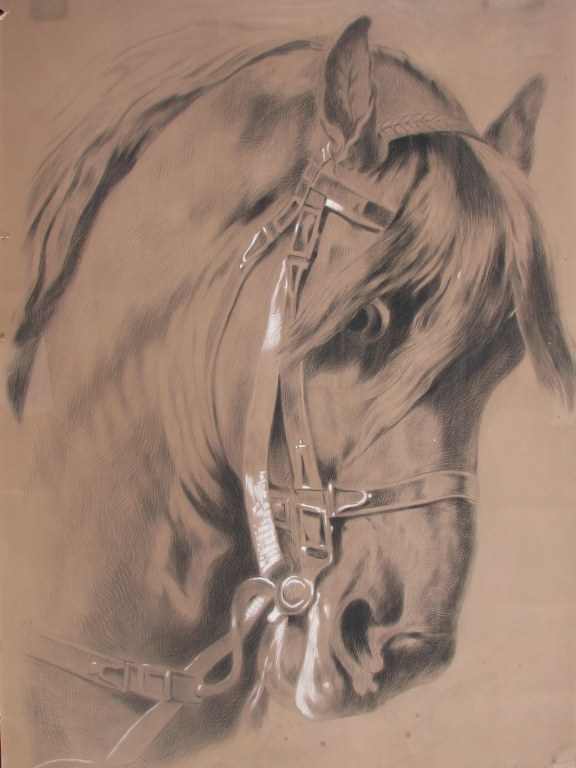 Drawing of horse head attributed to Arina Hugenholtz