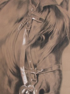 Drawing of horse head attributed to Arina Hugenholtz-4