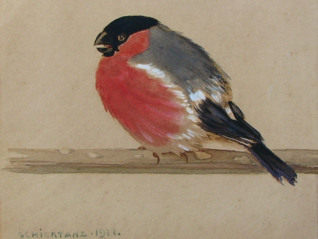 Aquarel rode vink door Carl Schicktanz uit 1922